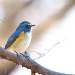 青い鳥症候群の対処法